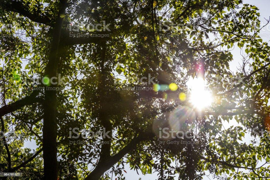 Sun light royalty-free stock photo
