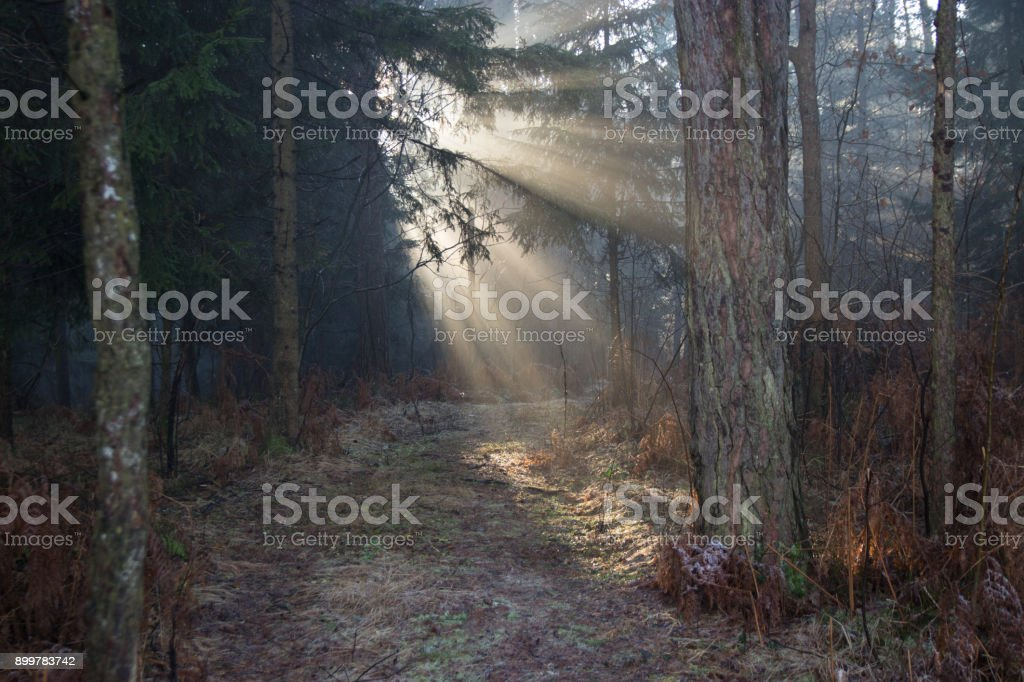 Sun lit path through the forest stock photo