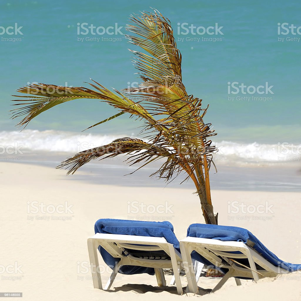 Sun lounger and palm at exotic beach royalty-free stock photo