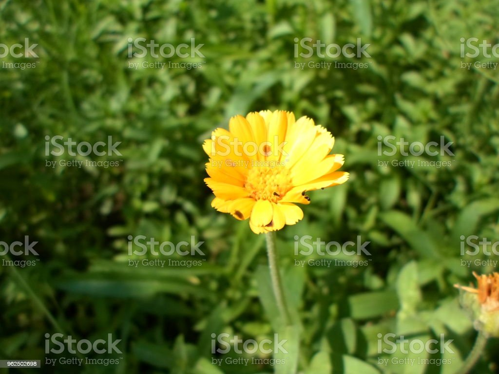 amante do sol - Foto de stock de Beleza natural - Natureza royalty-free