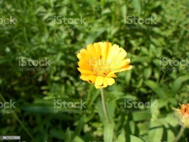 Foto de Amante Do Sol e mais fotos de stock de Beleza natural - Natureza