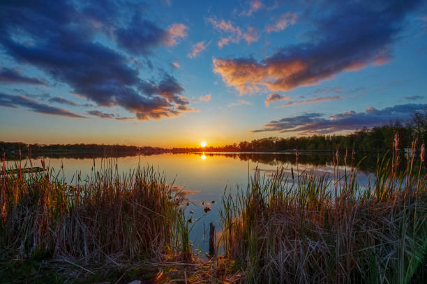 Sun on Horizon over Quiet Water through Cattails Sun on Horizon over Quiet Water through Cattails at Sunset lake stock pictures, royalty-free photos & images