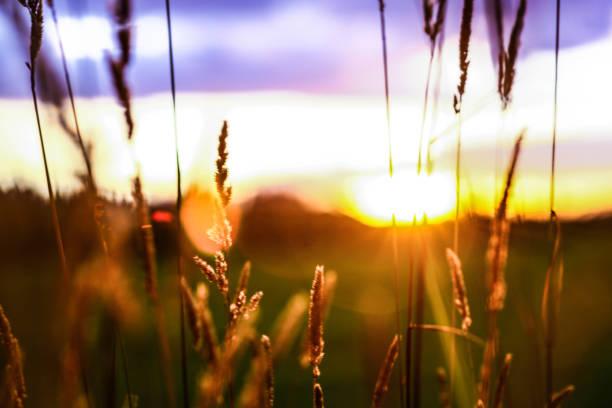 Sonne am Horizont – Foto