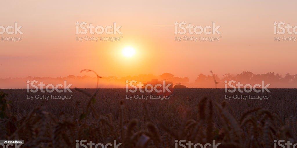 Sun over combine harvesting wheat photo libre de droits