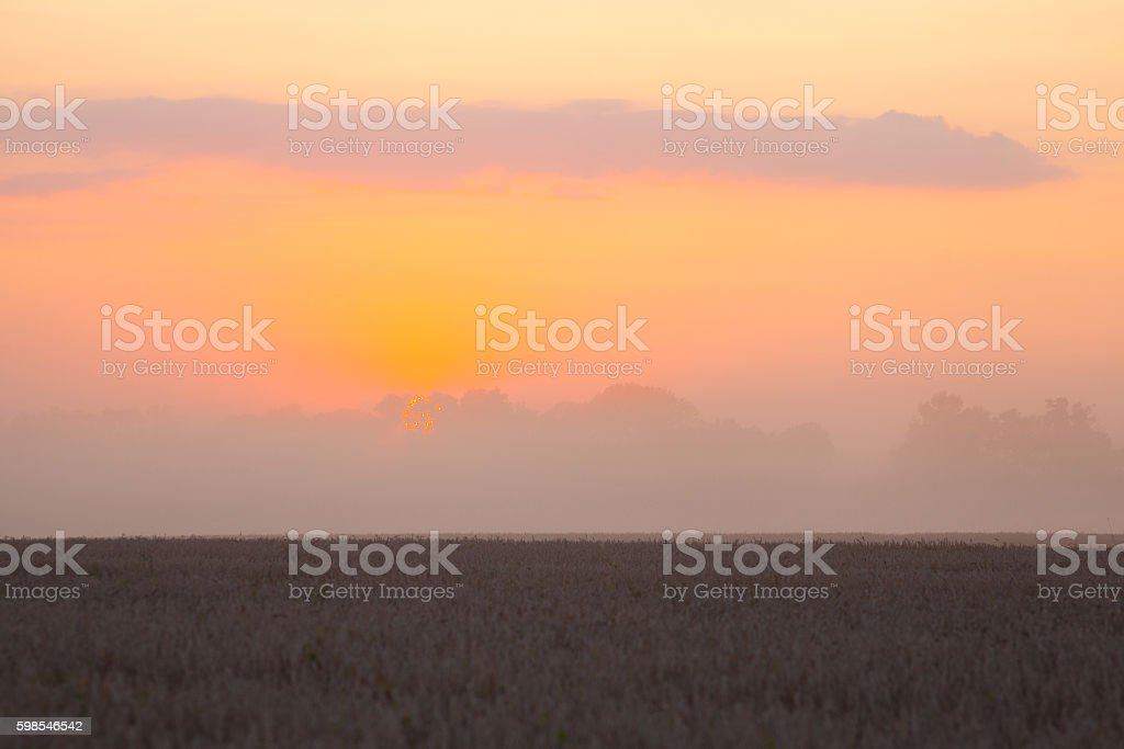 Sun over combine harvesting wheat photo libre de droits