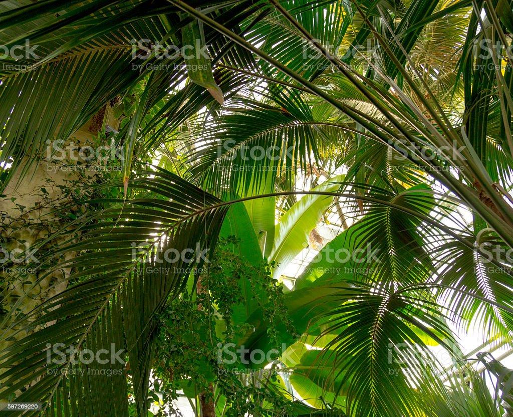 Sonne über green palm leaves  Lizenzfreies stock-foto