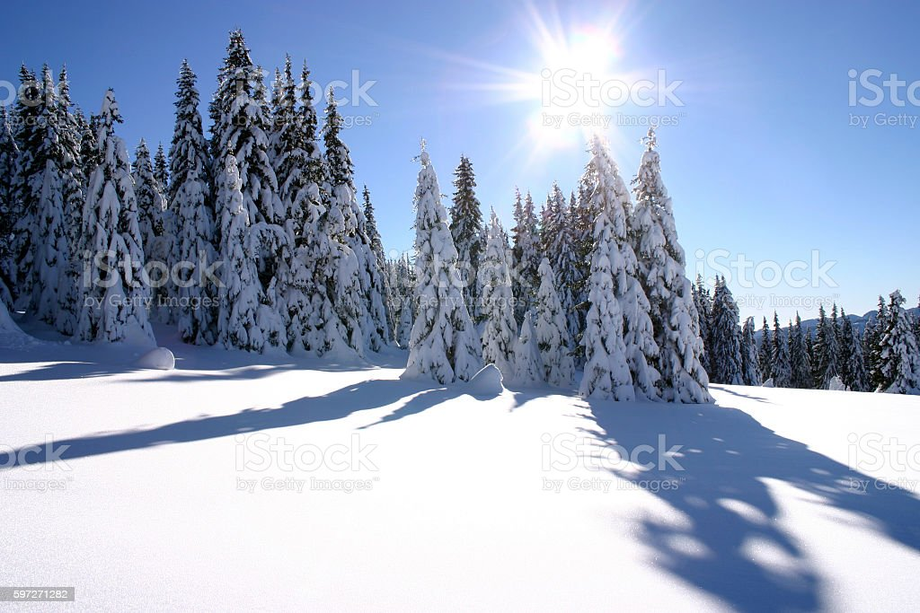 sun over snowy forest Lizenzfreies stock-foto