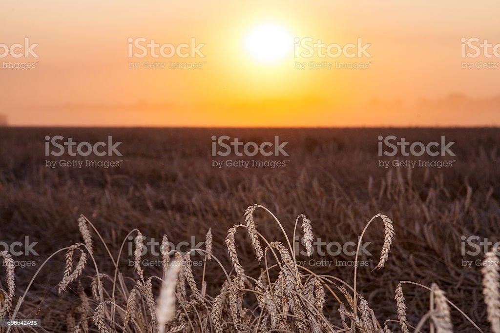 Lever de soleil sur le champ de blé photo libre de droits
