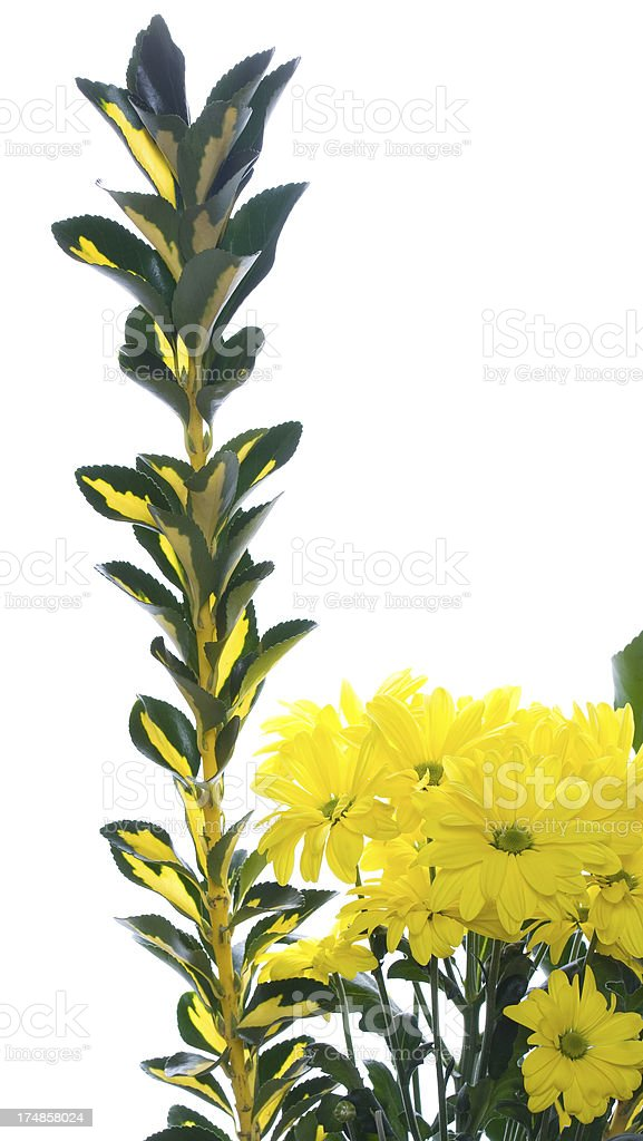 Sun plants royalty-free stock photo