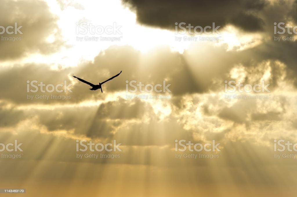 Sun Ray Heaven bird – Foto