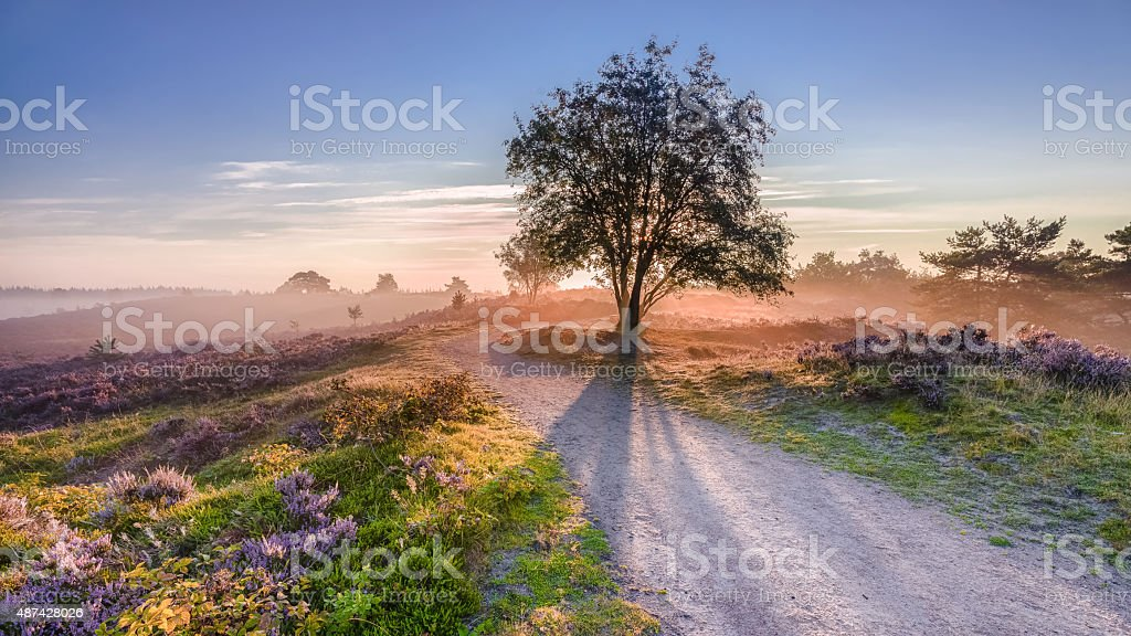sun rays coming from behind tree Sun rays coming from behind tree in a Dutch moorland 2015 Stock Photo