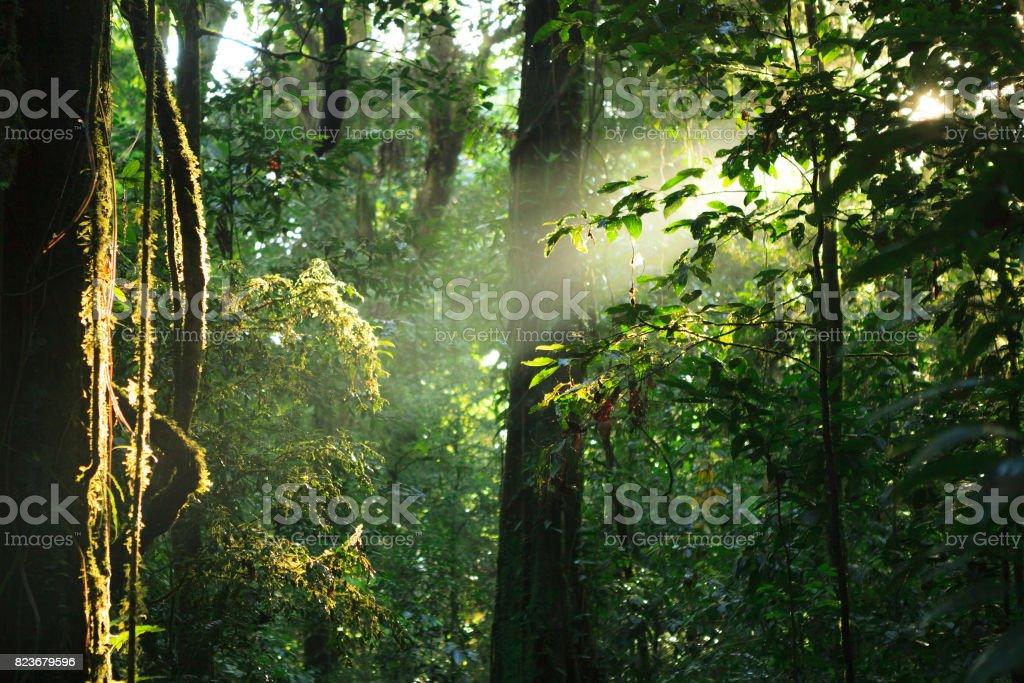 Sun rays deep in the rain forest stock photo