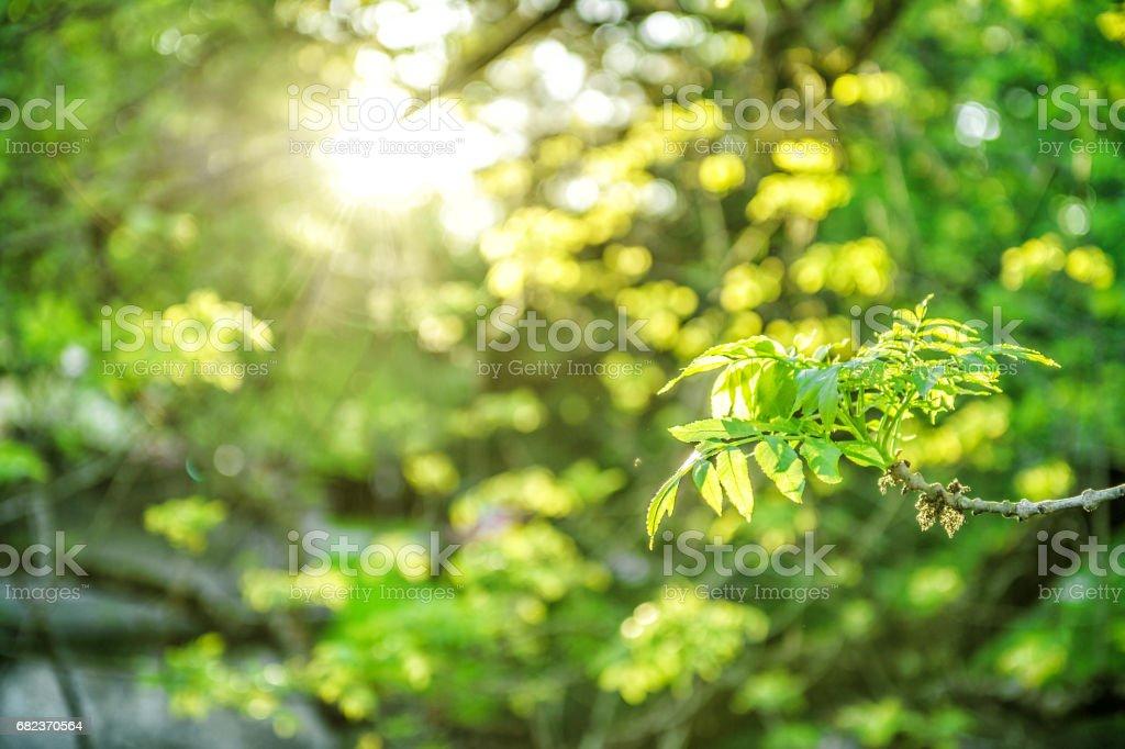 Sun rays fresh green foliage Spring nature background royaltyfri bildbanksbilder