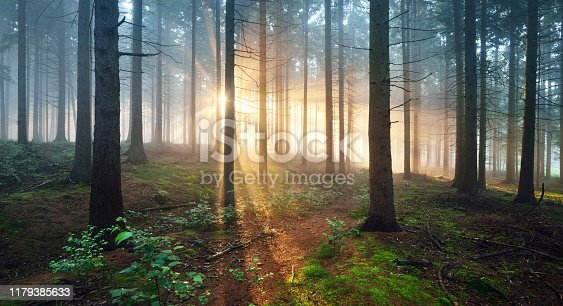 istock Sun rays in a dark misty forest. Osnabruck, Gemany 1179385633
