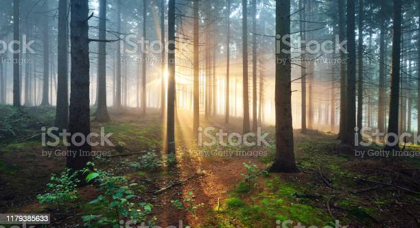 Photo of Sun rays in a dark misty forest. Osnabruck, Gemany