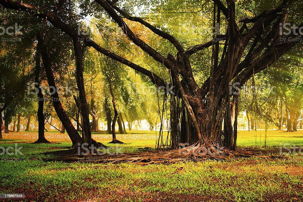 Los rayos de sol en el bosque de otoño. foto de stock libre de derechos
