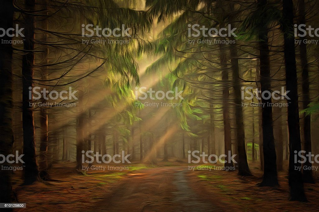 Sun rays in the forest stock photo