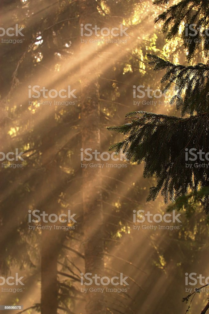 Sun rays in the woods royalty-free stock photo
