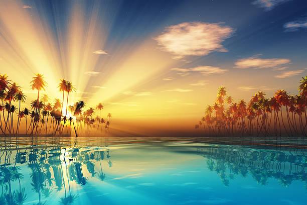 sun rays in kokospalmen - idylle stock-fotos und bilder
