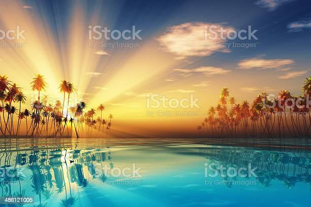 Photo of sun rays inside coconut palms