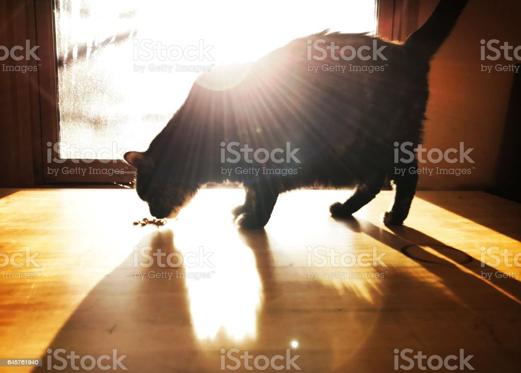 Sun Rays on Cat stock photo