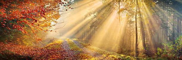 Sun Rays Penetrating Autumn Forest - XXXL 40 Mpix Panorama stock photo