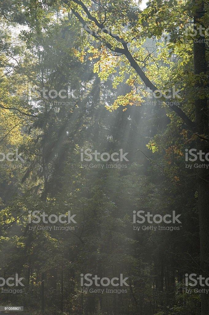 Sun rays shine through branches royalty-free stock photo