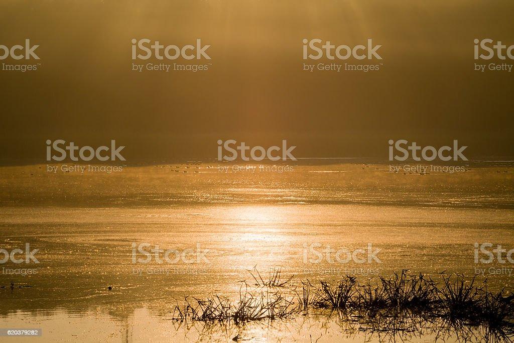 Sun rays under forest puddle, morning water landscape. zbiór zdjęć royalty-free