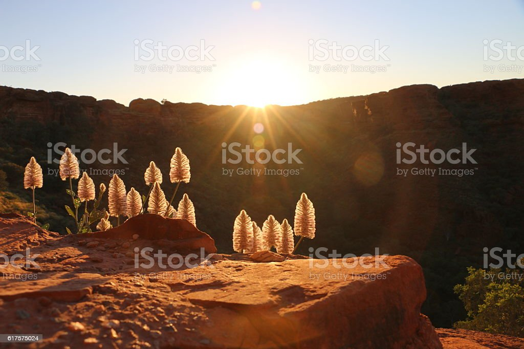 Sun Rise at King's Canyon stock photo