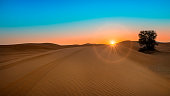 Sun rise at the Desert with beam and lonely tree and sand dune with beautiful sand pattern. Orange and Blue Sky