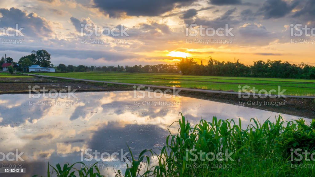 Sun rise with water reflection clouds in the young rice field and the road to Funeral pyre. stock photo