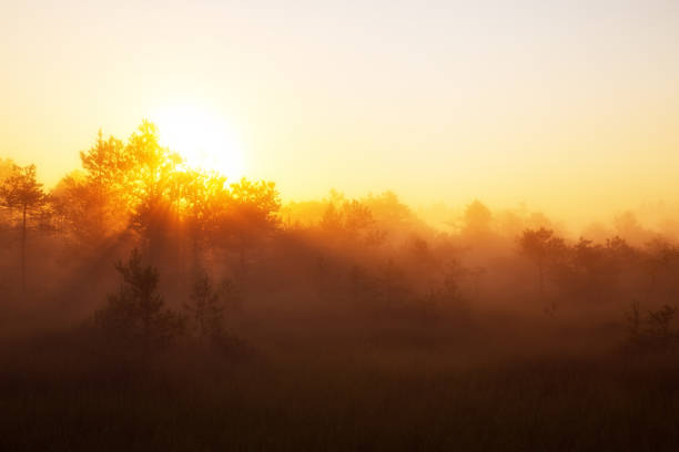 Sun rising above forest covering everything in light stock photo