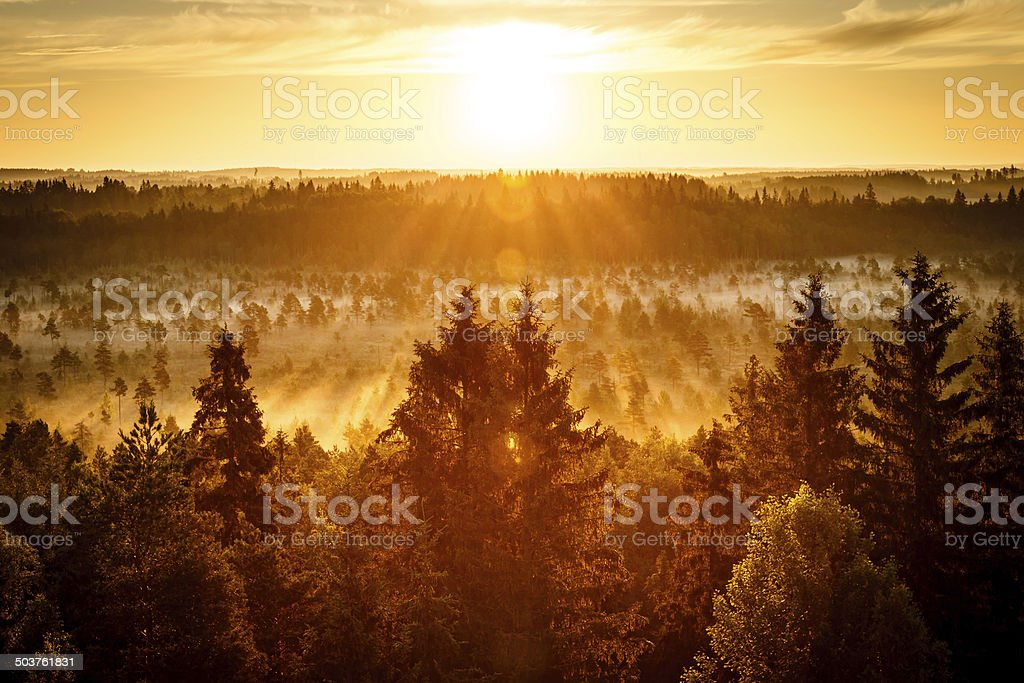 Sun Rising at Swamp royalty-free stock photo