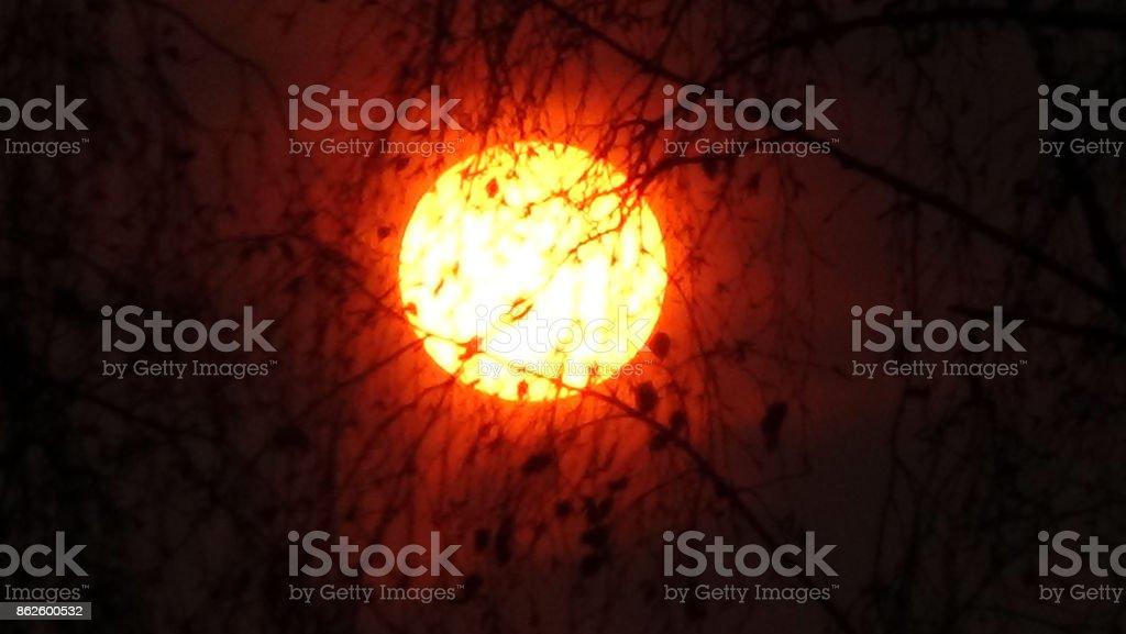 Sun rising behind trees stock photo