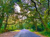 istock Sun set time on Oak Street , Magnolia Springs , Alabama USA 1199069645