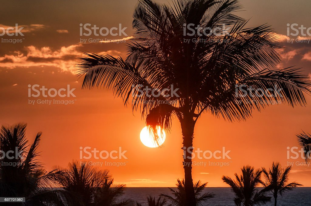 Sun sets behind palm tree silhouette against red sky stock photo