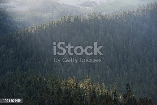istock Sun sets over a vast forest 1291404454
