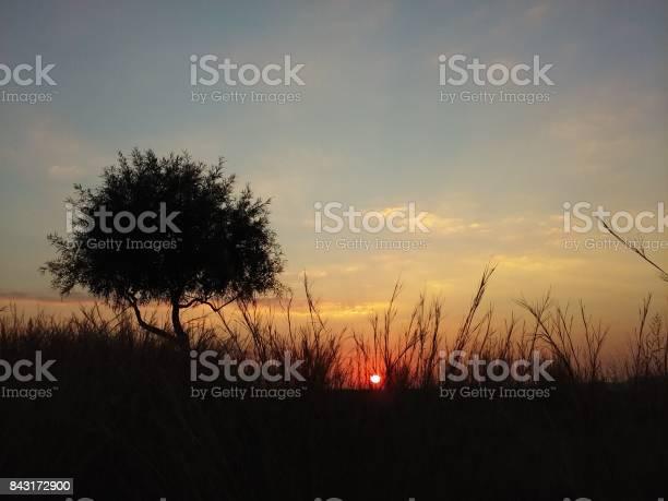 Photo of Sun Setting Behind High Grass