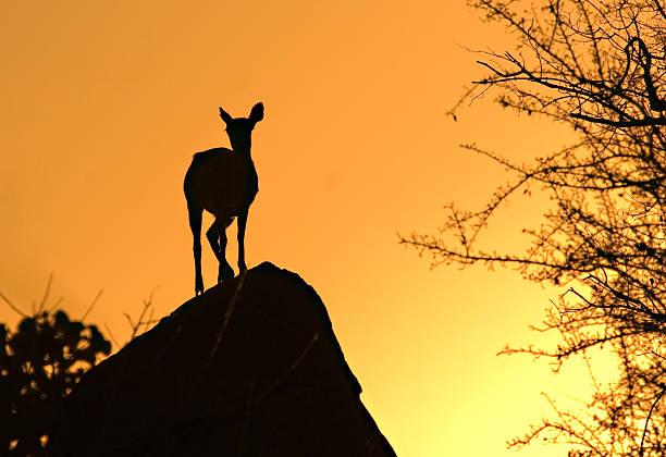 Sun setting in the kruger park picture id90804875?b=1&k=6&m=90804875&s=612x612&w=0&h=jsbuyhd7luqvaa4e2zgxvqzazhgbs8isb0rq ub9as4=