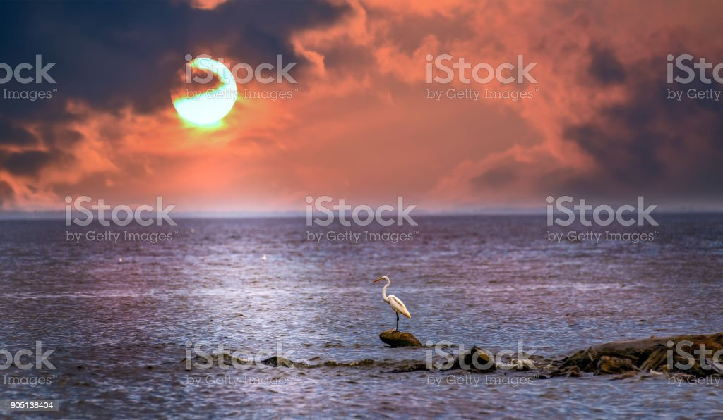 Sun setting on the Chesapeake bay behind a Great Egret standing on a rock jetty stock photo