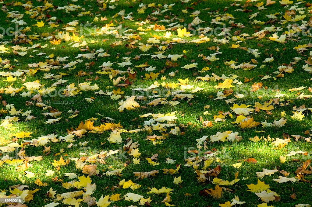 Sun shade and leaves royalty-free stock photo