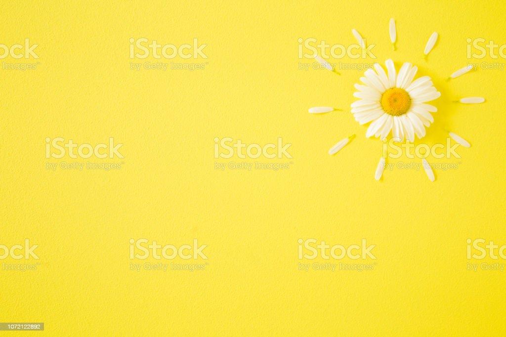Sun Shape Created From Fresh White Daisy On Bright Yellow
