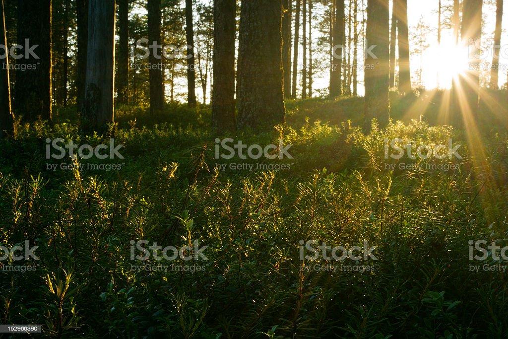 Sun Shines Behind Trees stock photo