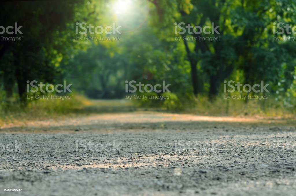 Sun shines into Forest Background with soft colors stock photo