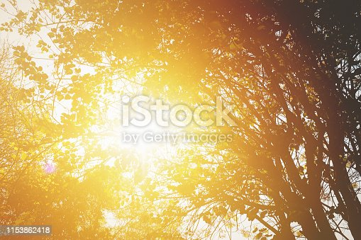 Warm sun seen through foliage.