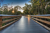 Sun shines through mangrove trees that line a Boardwalk leading down to the beach of Clam Pass on a sunny day in Naples, Florida