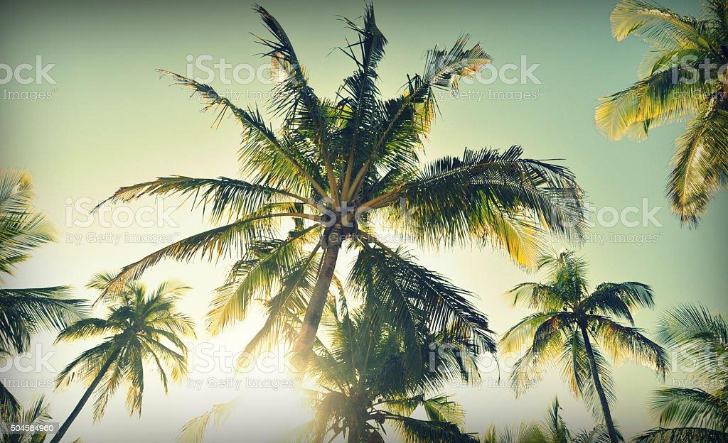 Sun shines through palm trees in Itacaré, Brazil stock photo