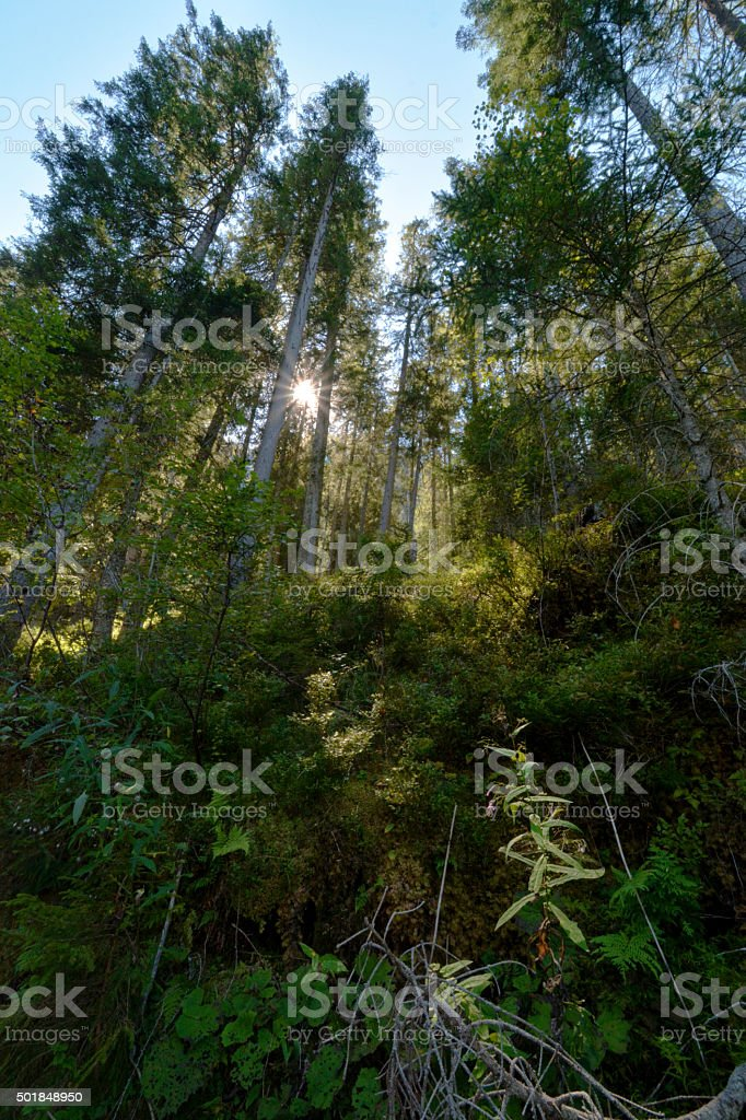 sun shines through the forest stock photo