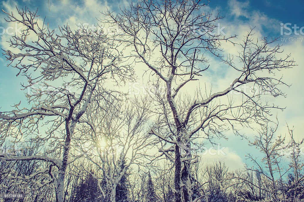 Sun Shining Behind Snow Covered Trees stock photo