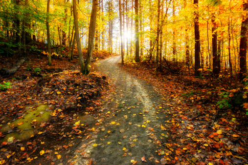 Michel blogue le Mercredi des Cendres et le Carême de 40 jours pour réfléchir à trois questions/  Sun-shining-down-the-golden-forest-path-picture-id513705523?b=1&k=6&m=513705523&s=170667a&w=0&h=AC6C3y6DHkOEPi731Ec1hfvIaYHjcBoEXc2OJK0jMYM=